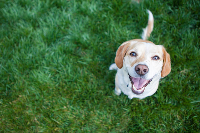 The Best Dog Parks in the St George Area