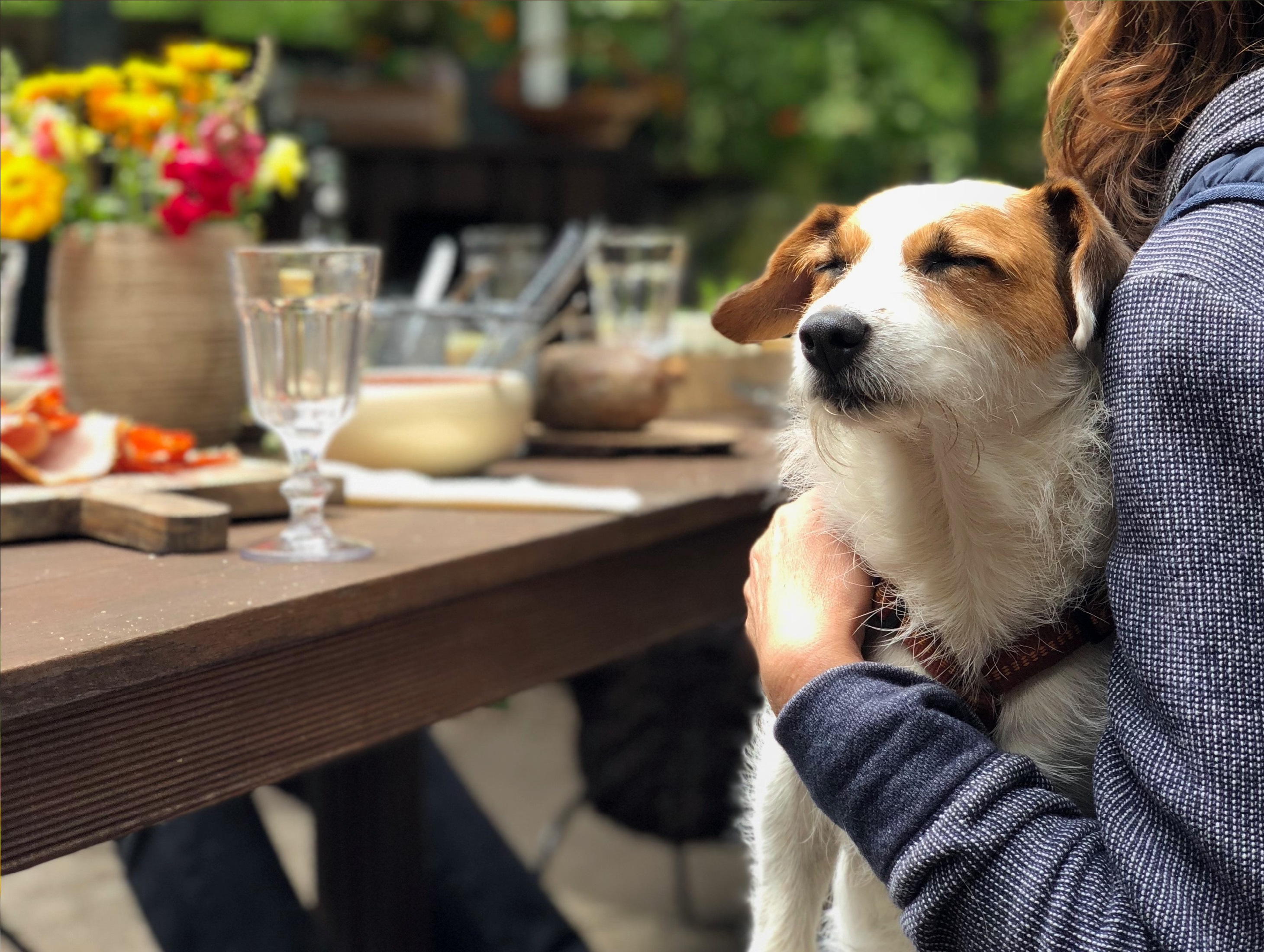 Dog-Friendly Cafes and Restaurants in St George